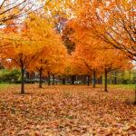 Arboretum Scavenger Hunt