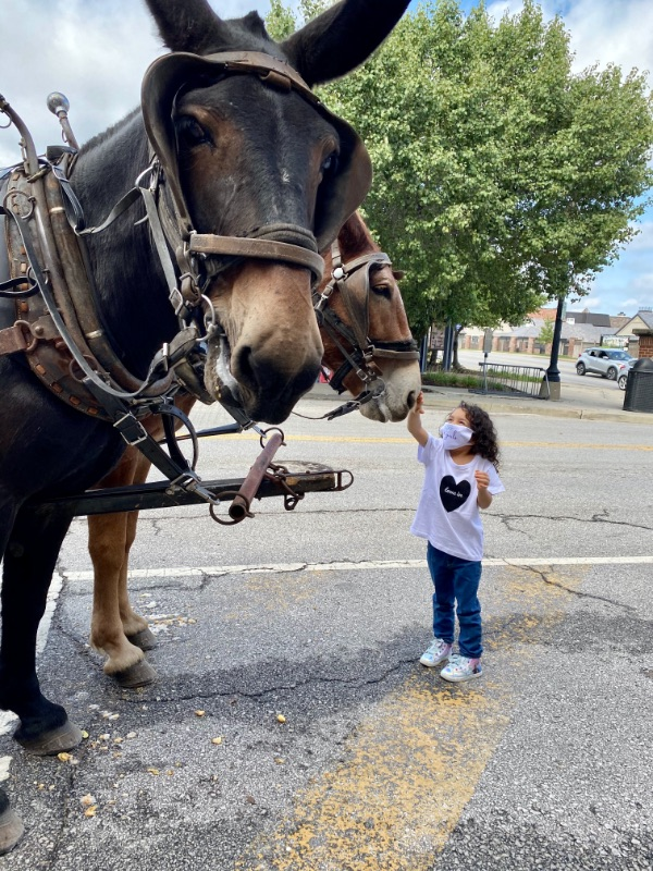 Eliana Fernández pets a mule in Independence, MO