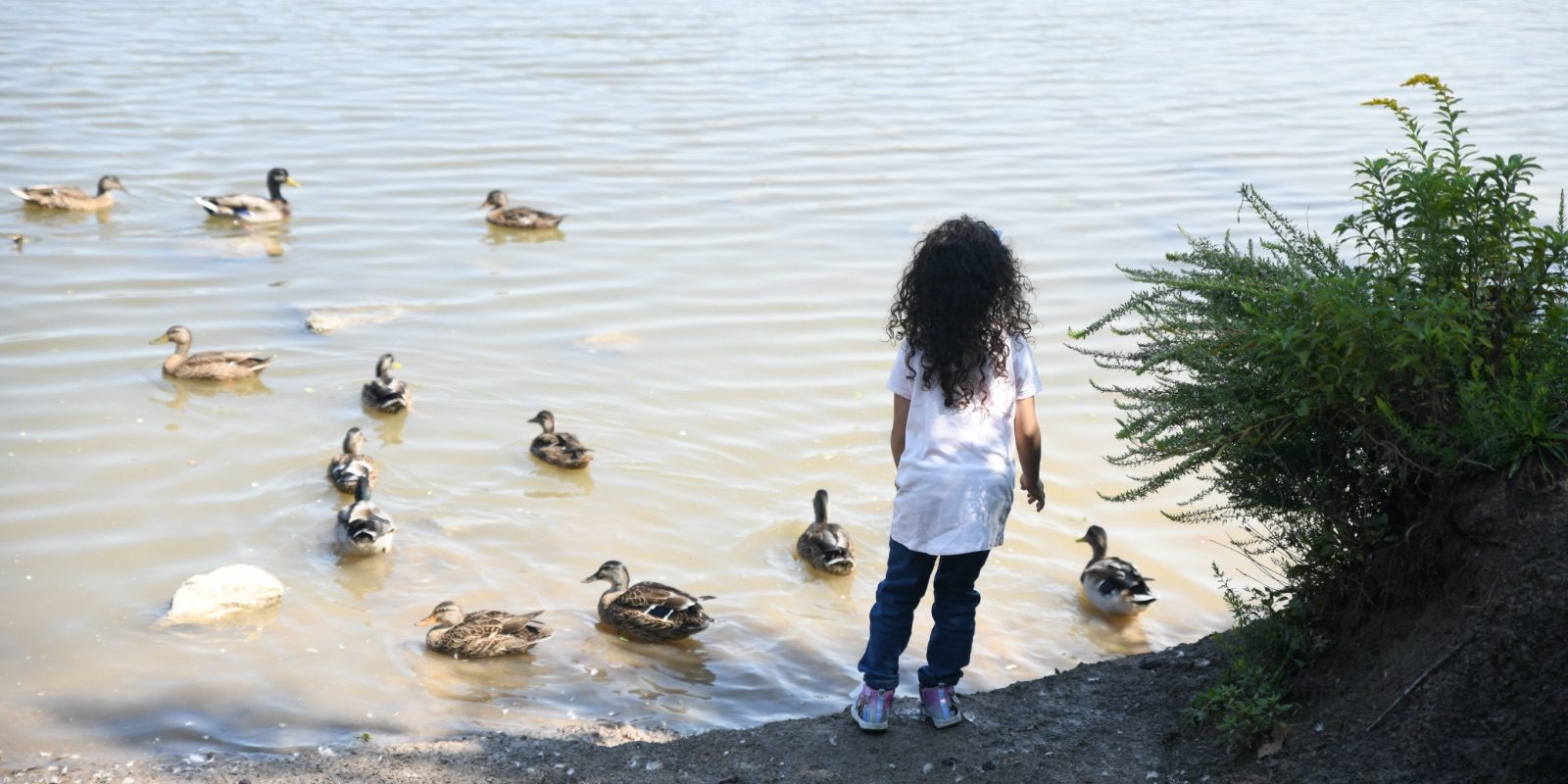 A child watches ducks swim in a pond in Waterfall Park in Independence, MO